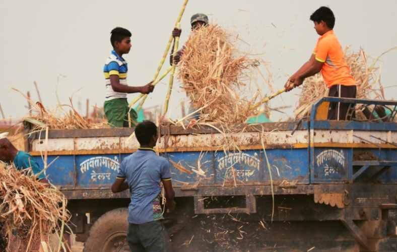Inside Maharashtra's Cattle Camp